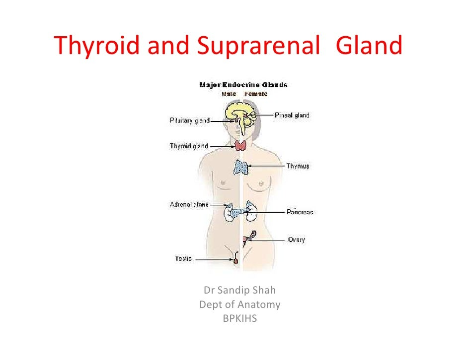 Thyroid and Suprarenal Gland            Dr Sandip Shah           Dept of Anatomy                BPKIHS