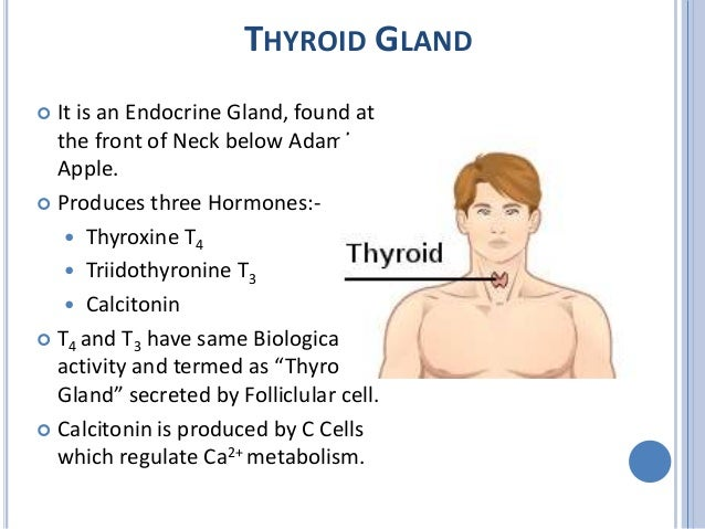 Thyroid and anti thyroid drugs Slide 2
