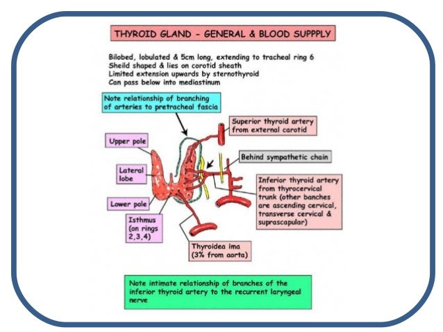 PARATHYROID HORMONE FUNCTION EBOOK