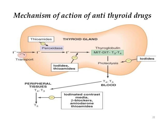 Synthroid Pharmacokinetics