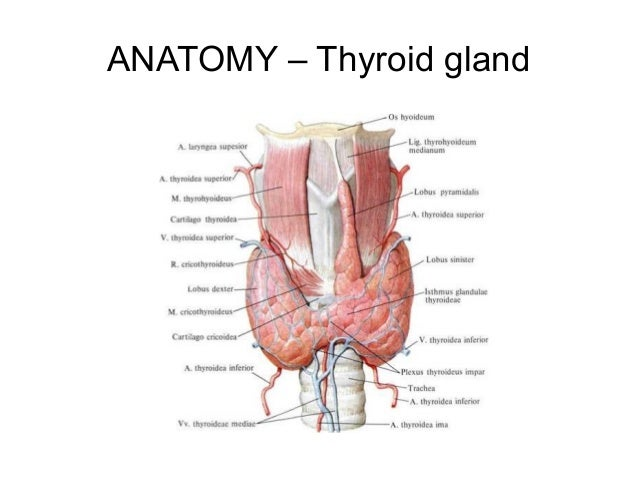 thyroidectomy, Human Body