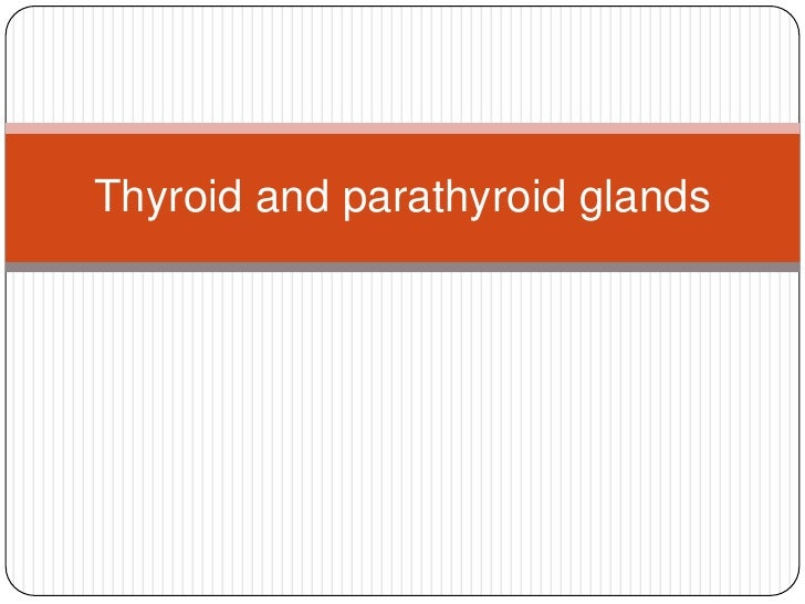 Thyroid and parathyroid glands<br />