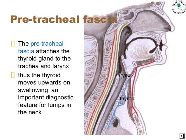 Anatomy of a stethoscope
