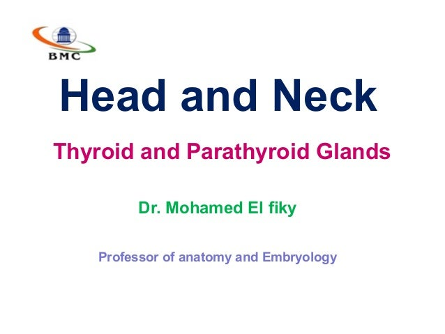 Head and Neck Thyroid and Parathyroid Glands Dr. Mohamed El fiky Professor of anatomy and Embryology