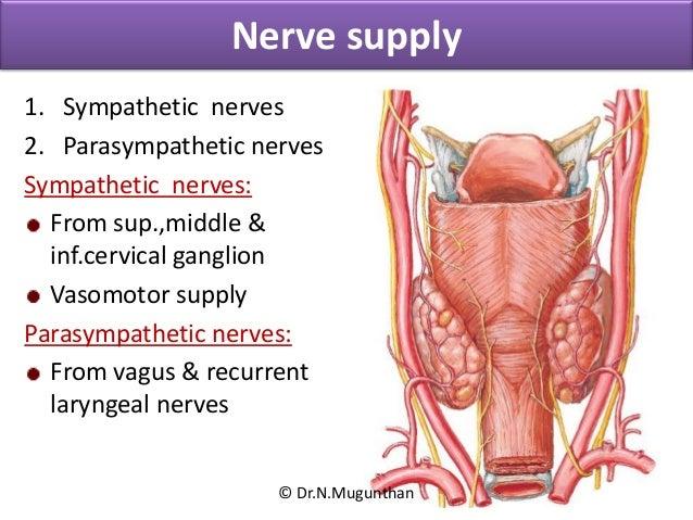 Thyroid Gland Integrated Lecture Dr N Mugunthan