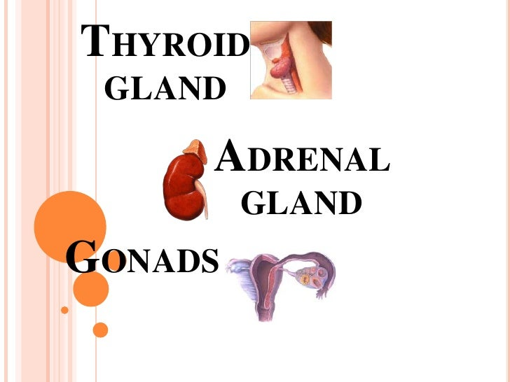 Thyroid Gland Adrenal Gland And Gonads