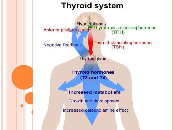 Thyroid Glandadrenal Gland And Gonads