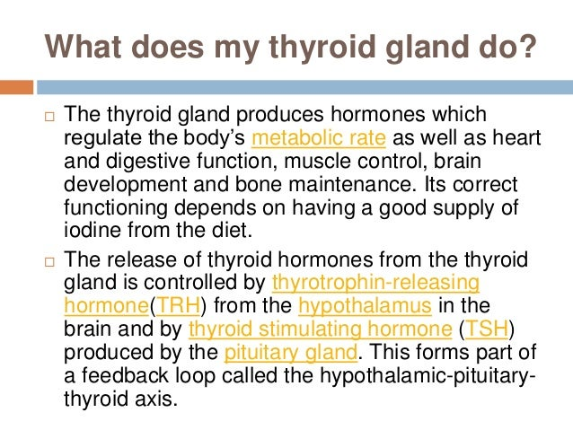 thyroid glands, Human Body