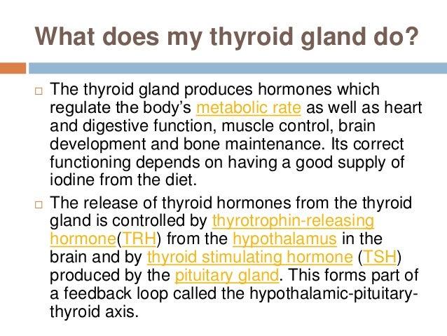 thyroid glands, Human Body