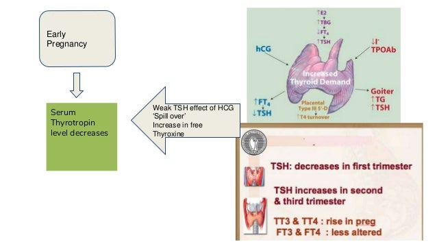 Thyroid Cancer: A Case-Based Approach