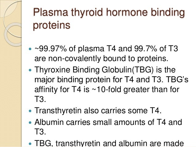 Plasma thyroid hormone binding proteins  ~99.97% of plasma T4 and 99.7% of T3 are non-covalently bound to proteins.  Thy...