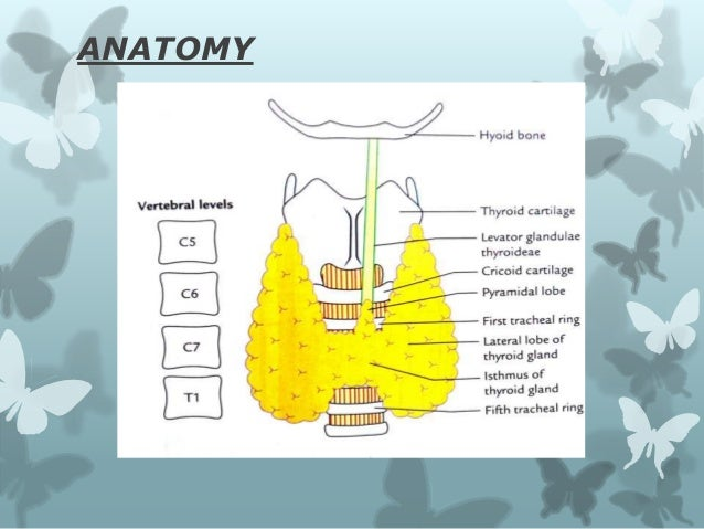 What is surgical anatomy