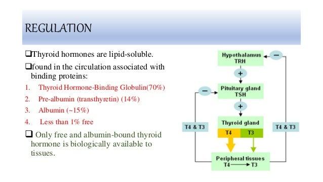 Thyroid T4 T3 Tsh