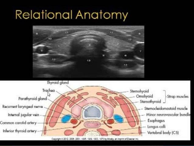 Thyroid Ultrasound 40398930