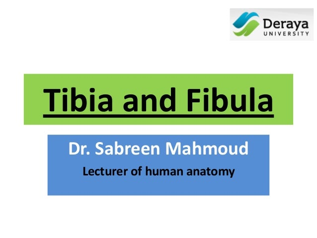 Tibia and fibula, Dr. sabreen mahmoud
