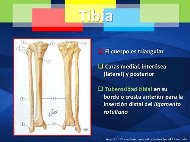 Tibia, peroné, articulación de la rodilla