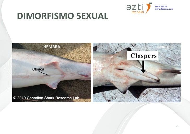 Tiburones en el Atlántico