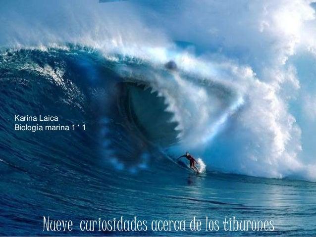 Nueve curiosidades acerca de los tiburones Karina Laica Biología marina 1 ' 1
