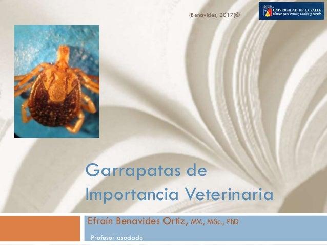 Garrapatas de Importancia Veterinaria Efraín Benavides Ortiz, MV., MSc., PhD Profesor asociado (Benavides, 2017)©