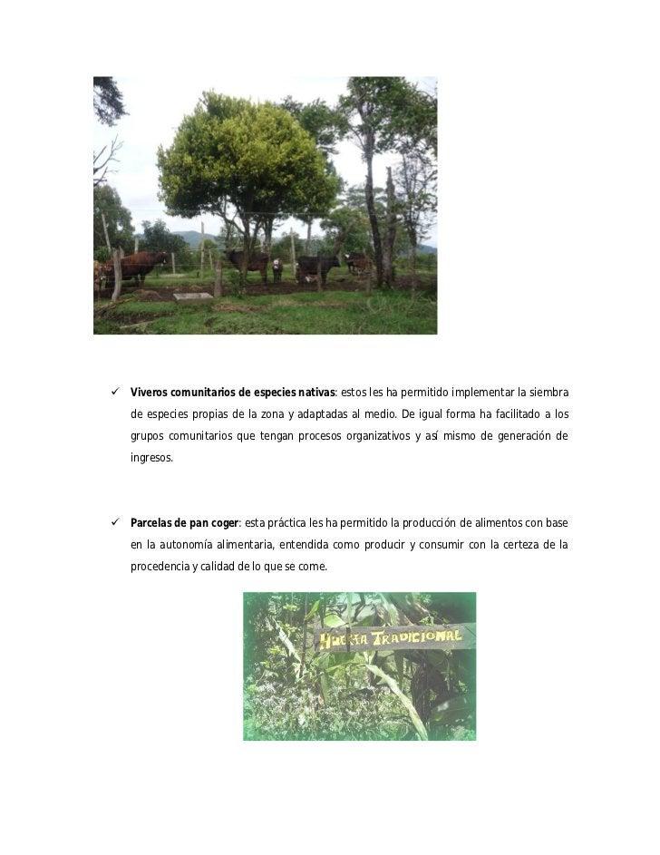  Viveros comunitarios de especies nativas: estos les ha permitido implementar la siembra   de especies propias de la zona...