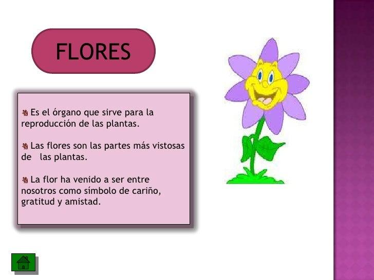 Las partes de la planta y sus funciones for Para q sirven las plantas ornamentales