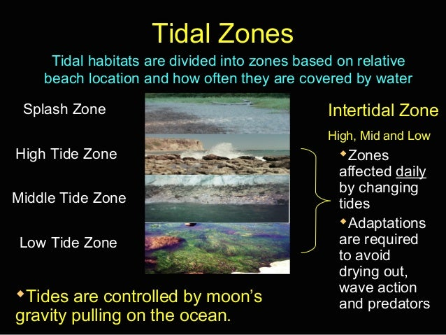 Tidal zones notes ppt tidal sciox Image collections