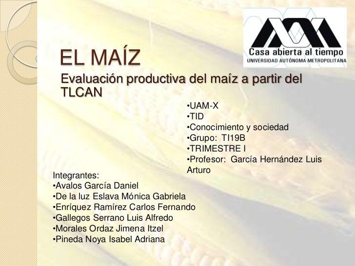 EL MAÍZ Evaluación productiva del maíz a partir del TLCAN                              •UAM-X                             ...