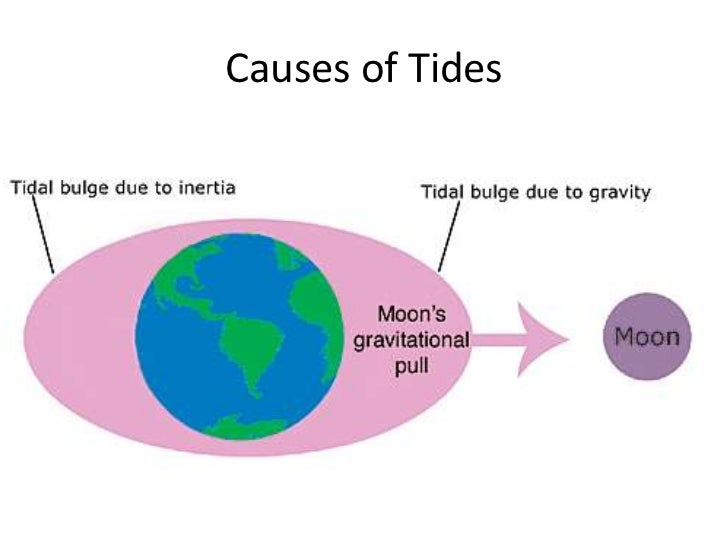What Causes High Tide and Low Tide? Why Are There Two Tides Each Day?