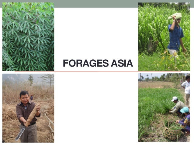 FORAGES ASIA