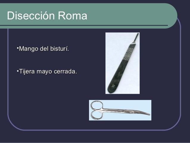 Tracción             Pinza Allis:                Curva           Bordes dentados           Para sostener           tejidos.