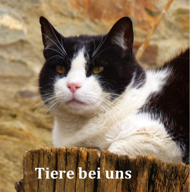 Tiere bei uns