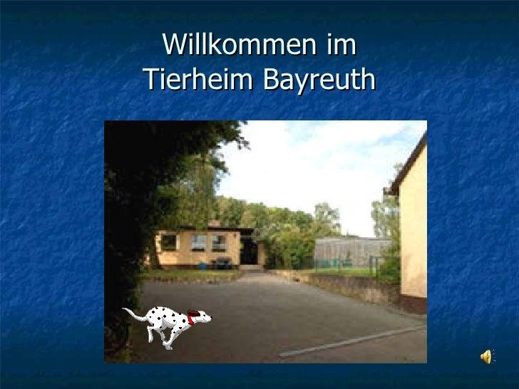 Willkommen im Tierheim Bayreuth
