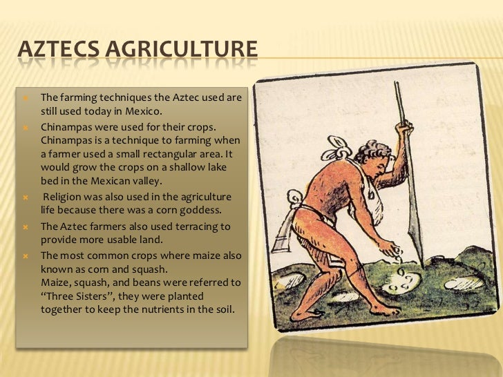 AztecsAgriculture<br />The farming techniques the Aztec used are still used today in Mexico. <br />Chinampas were used for...