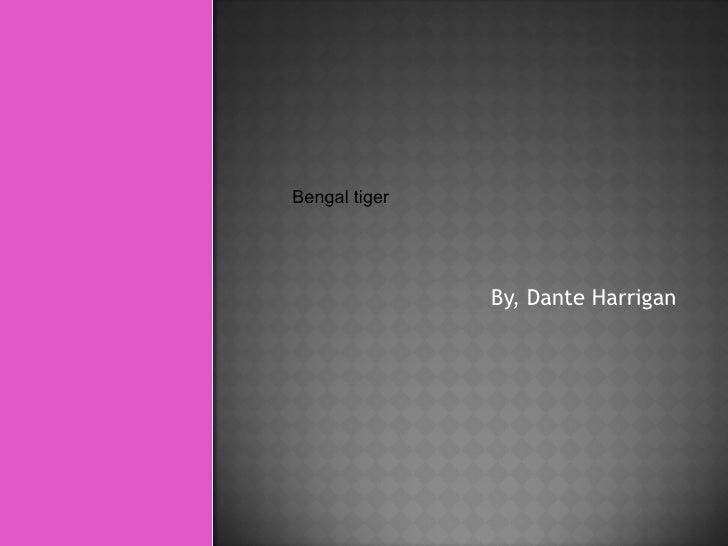 By, Dante Harrigan Bengal tiger