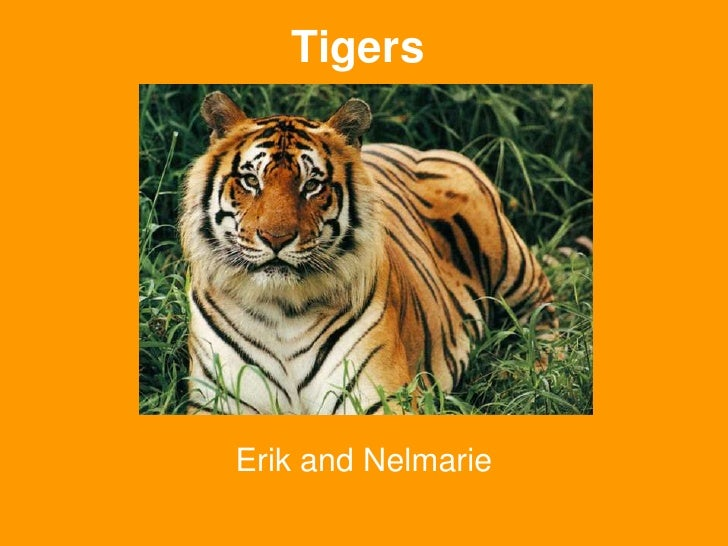 Tigers<br />Erik and Nelmarie<br />