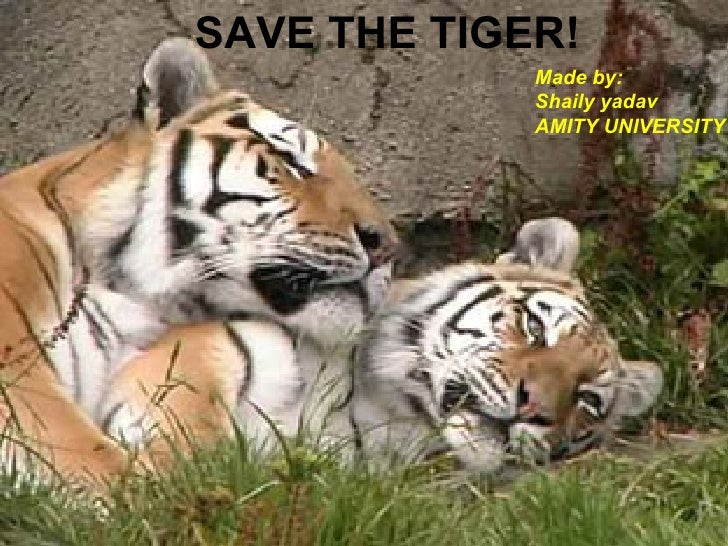 SAVE THE TIGER! Made by: Shaily yadav  AMITY UNIVERSITY