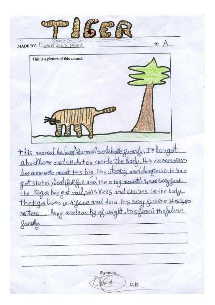 Tigerdavid