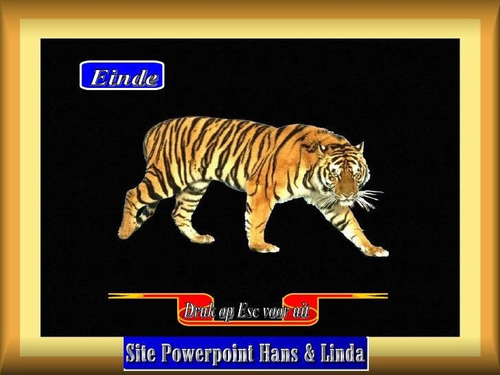 Powerpoint Hans Tigers Wallpapers Druk op Esc voor uit Einde