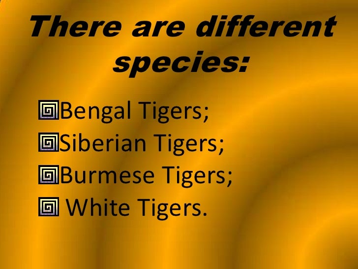 Usdgus  Outstanding Tigers Powerpoint With Fair  With Astonishing Biotechnology Powerpoint Presentation Also Template Powerpoint Business In Addition Commercial Powerpoint And Powerpoint Prepositions As Well As Office Powerpoint  Free Download Additionally Microsoft Powerpoint App For Ipad From Slidesharenet With Usdgus  Fair Tigers Powerpoint With Astonishing  And Outstanding Biotechnology Powerpoint Presentation Also Template Powerpoint Business In Addition Commercial Powerpoint From Slidesharenet