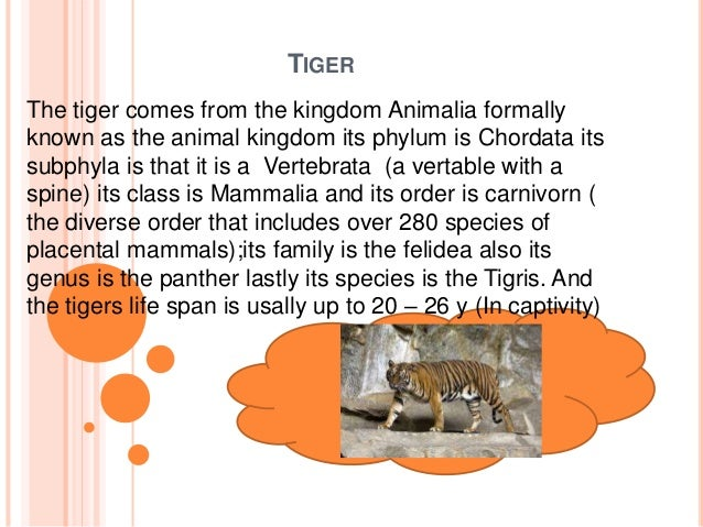 Image of: Sea Slideshare Tiger Science Animal Kingdom