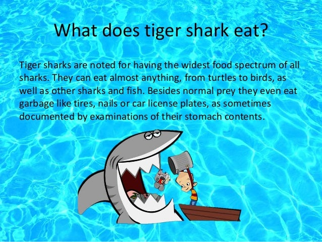 Tiger sharks eating fish for What do fish eat
