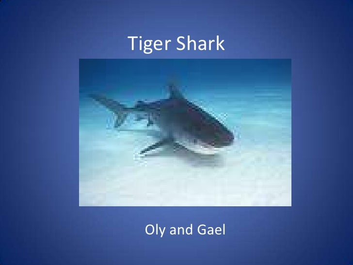 Tiger Shark<br />Oly and Gael<br />