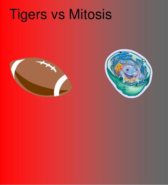 Tigers vs Mitosis