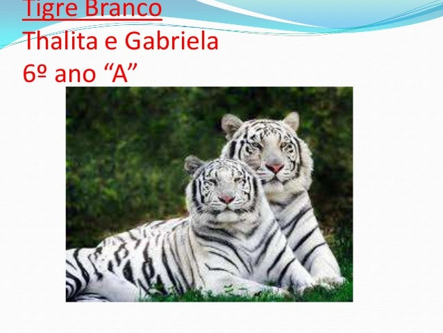 "Tigre BrancoThalita e Gabriela6º ano ""A"""