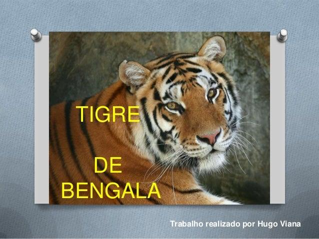 TIGRE  DEBENGALA          Trabalho realizado por Hugo Viana