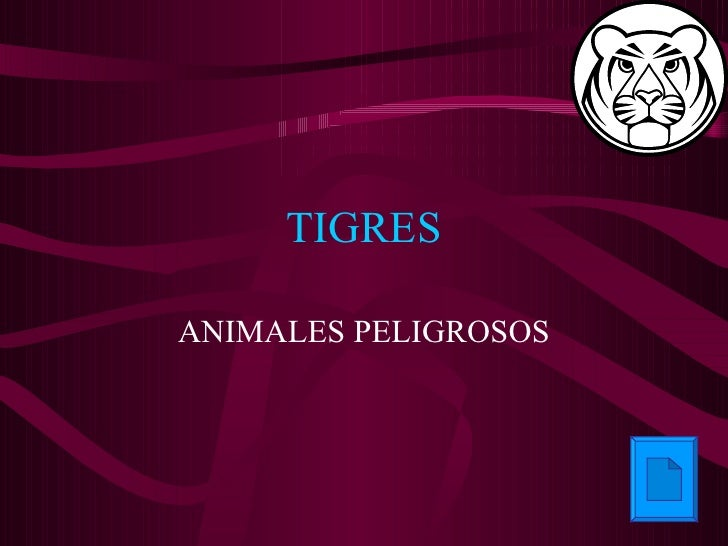 TIGRES ANIMALES PELIGROSOS
