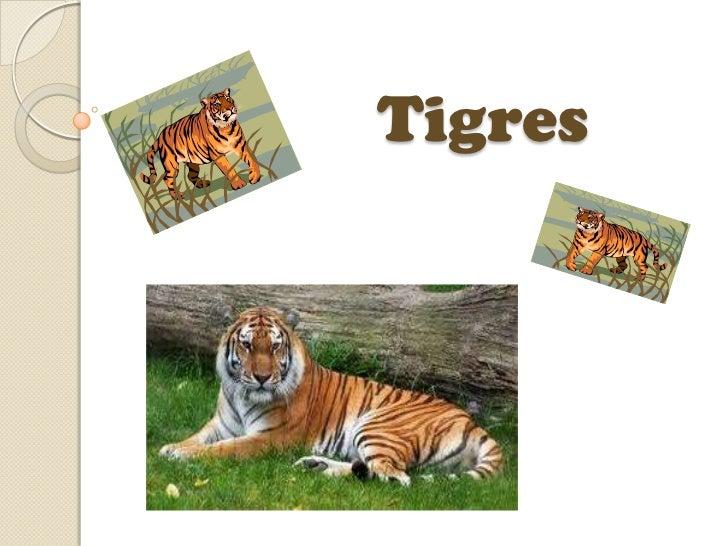 Tigres<br />