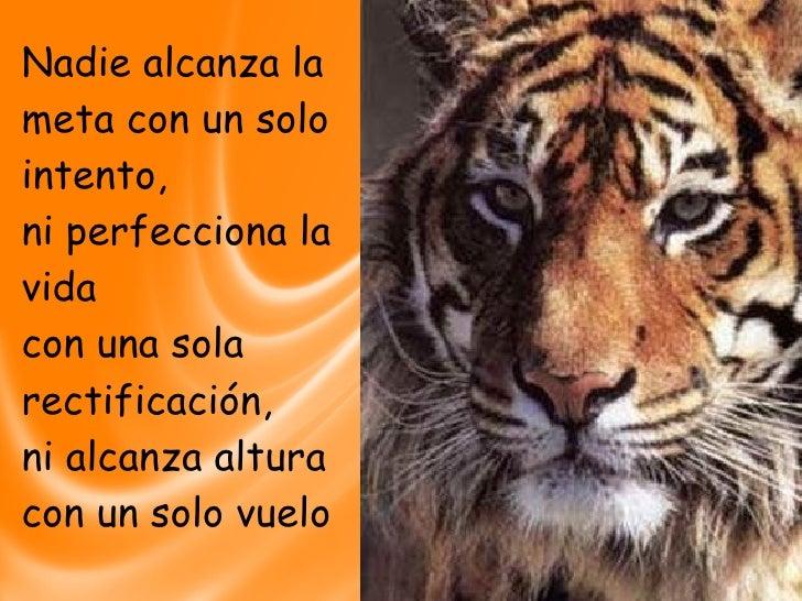 Tigres2 Slide 2