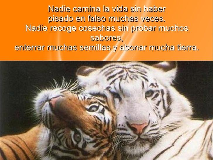 Tigres2 Slide 3