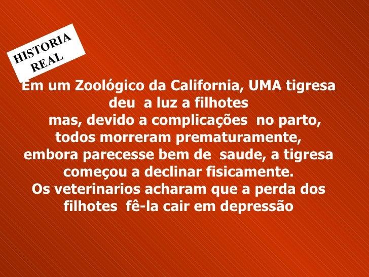 Em um Zoológico da California, UMA tigresa deu  a luz a filhotes   mas, devido a complicações  no parto,  todos morreram...